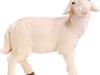 Schaf stehend - € 15,80 (12 cm, lasiert)
