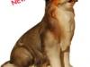 Berner-Sennenhund - € 15,60 (10 cm, lasiert)